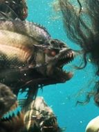 Photo Piranha 3D