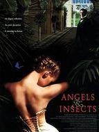 Des anges et des insectes
