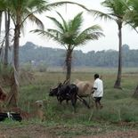 Photo L'enfant de Goa