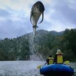 photo dam shark