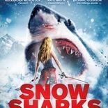 photo snow shark