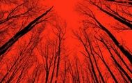 The Woods : Blair Witch - Bande-Annonce - VO