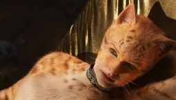 Photo Cats