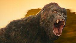photo King Kong