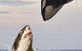 Alphas : le réalisateur de Destination Finale 5 prépare un film avec des requins tueurs et un orque taré