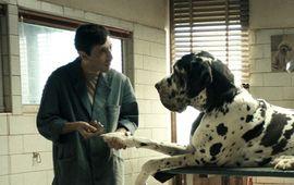 Dogman : critique chienne