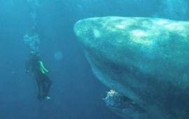 En eaux troubles : Jason Statham fait la bagarre au super-requin dans un nouveau super-trailer