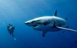 47 Meters Down : des requins nettement plus énervés et assoiffés de sang dans la bande-annonce de la suite
