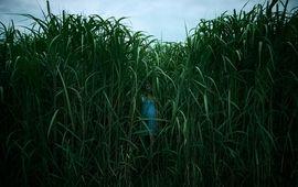 In the Tall Grass : première image d'une adaptation de Stephen King très attendue sur Netflix