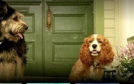 La Belle et le Clochard : découvrez le remake clodo tout choupi de Disney+ !