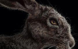 Le terrifiant The Witch a enfin une date de sortie française