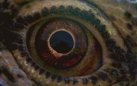 Voyage of Time : Terrence Malick dévoile un premier trailer époustouflant de son nouveau film
