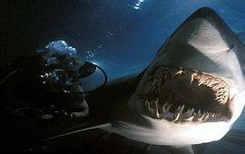 Le mal-aimé : Peur bleue de Renny Harlin, gros film de requin jouissif