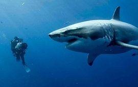 Valerian, Dunkerque, Les Petits mouchoirs : 10 films qui seraient vraiment mieux avec des requins