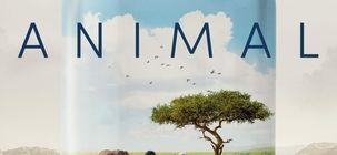 Animal : il faut sauver le monde dans la bande-annonce du film de Cyril Dion, réalisateur de Demain