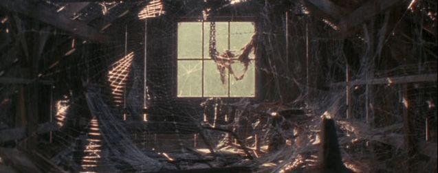 photo Arachnophobie