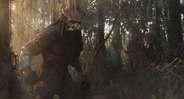 photo The Predator